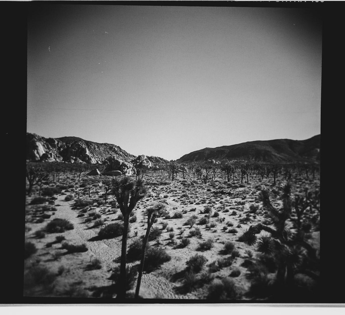 photo of JOSHUA TREE ca by tyler cuddy